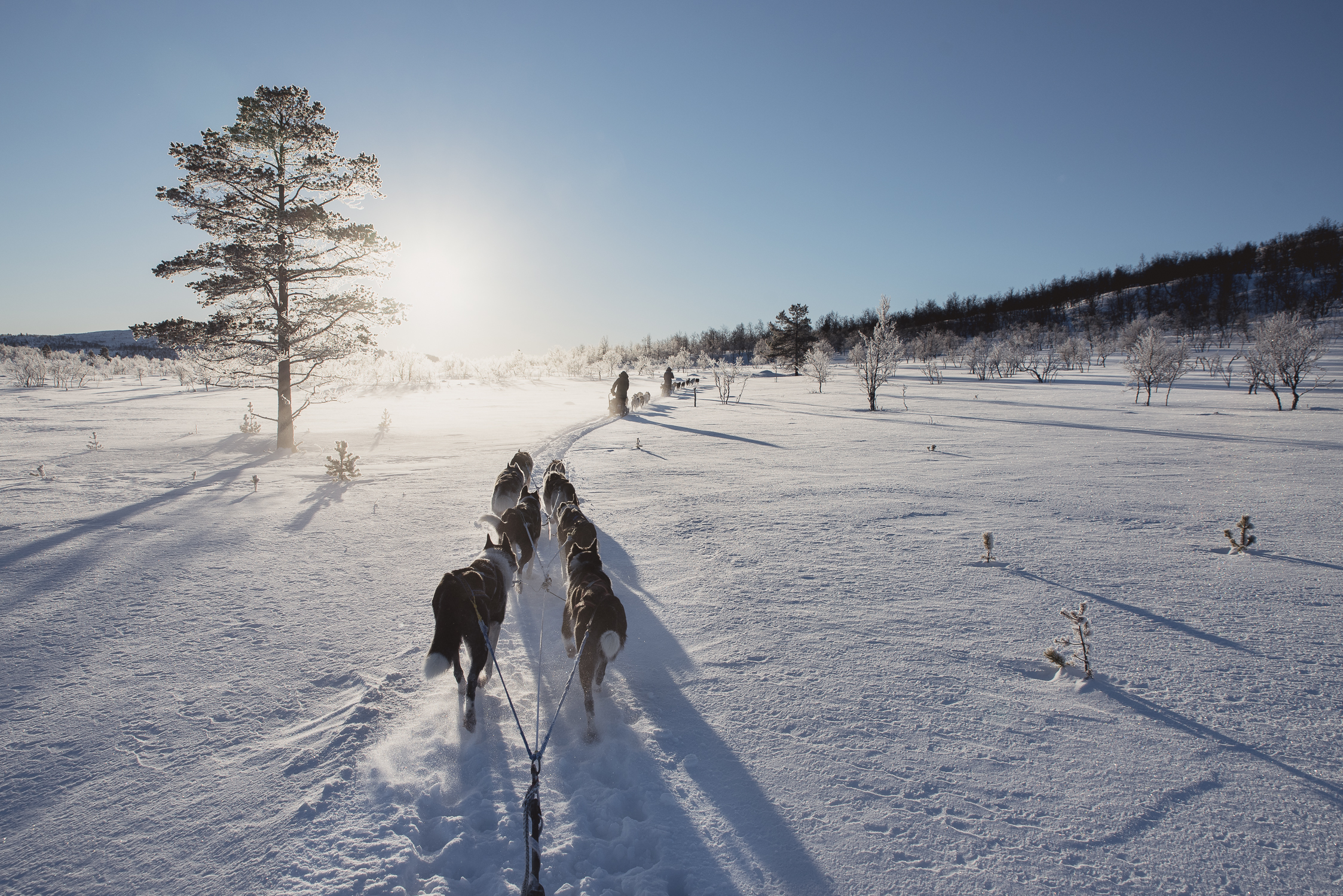 Lapland dog sleeding