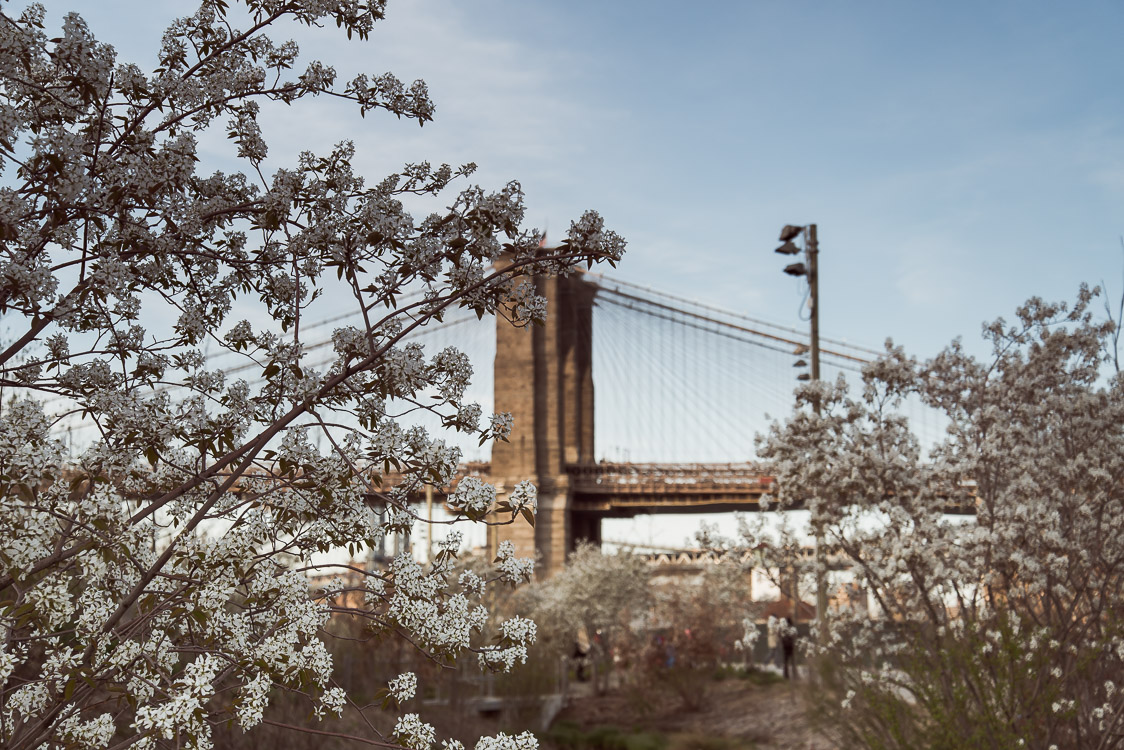 brooklyn bridge with flowers