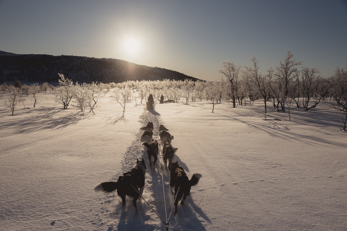 husky lapland finland