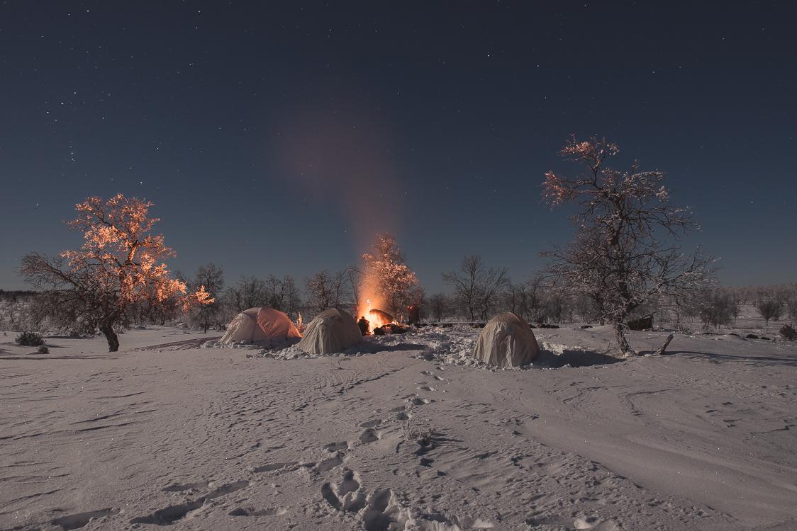 Campement Chiens de traineau Laponie