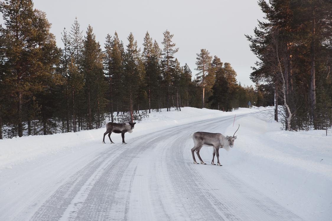 Rennes sur les routes de Laponie