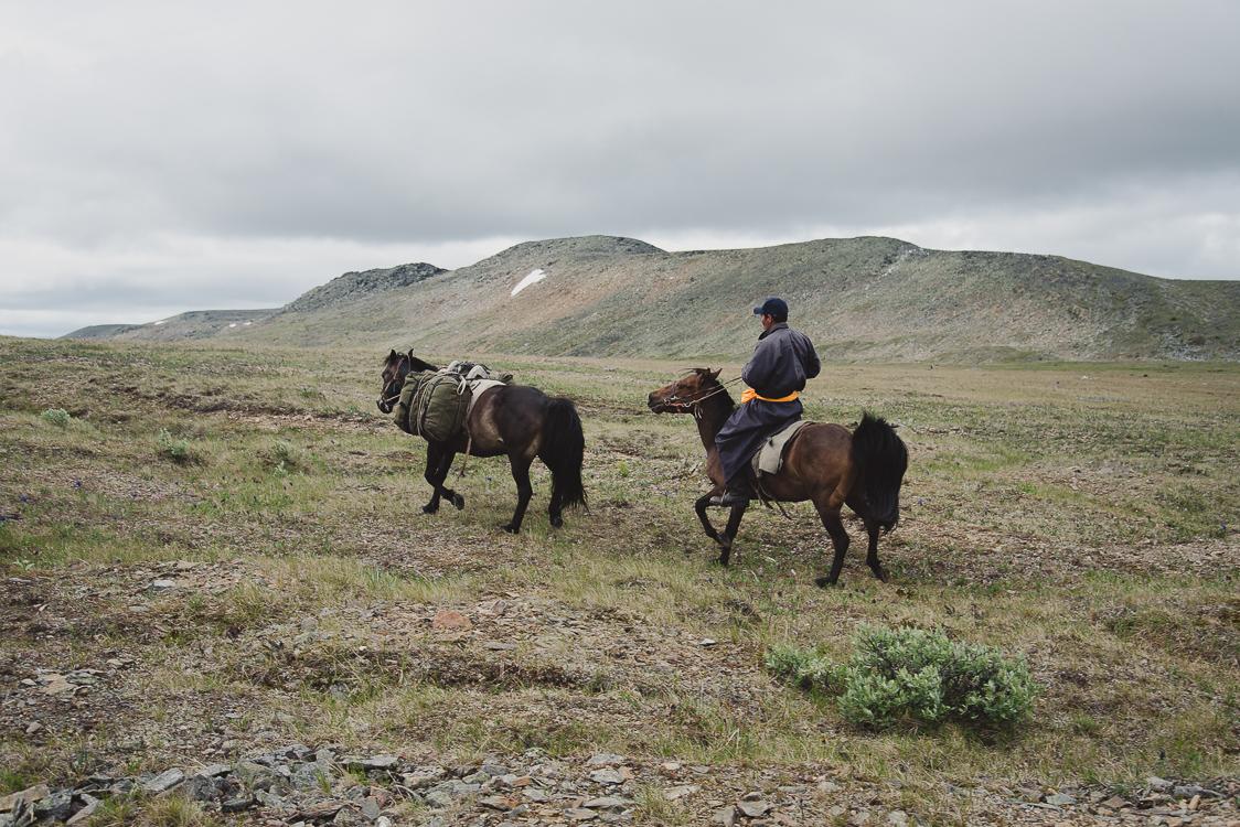Tsaatan et chevaux